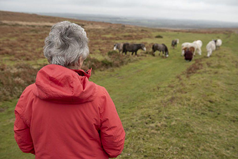 Senior woman overlooking wild horses