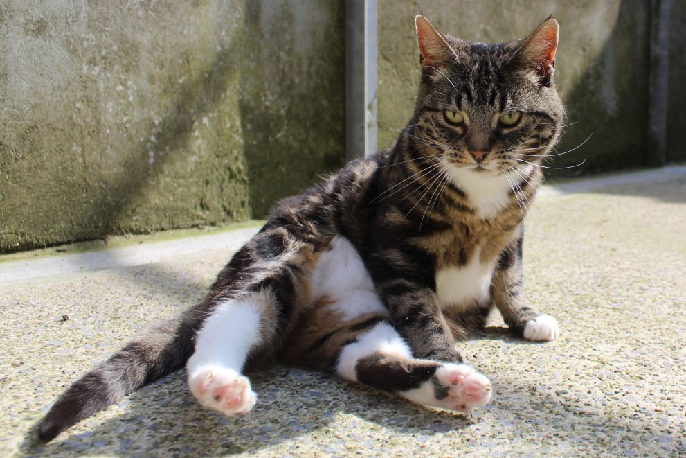 Tabby and white cat sitting